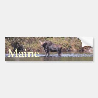 Maine koälg bildekal