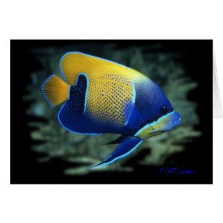 Majestätisk ängelfisk hälsningskort