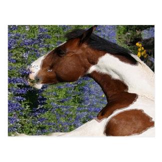 Måla hästen i fält av vildblommar vykort