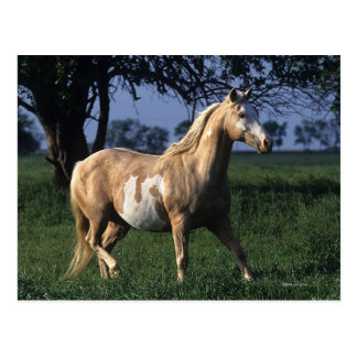 Måla hästen som står 2 vykort