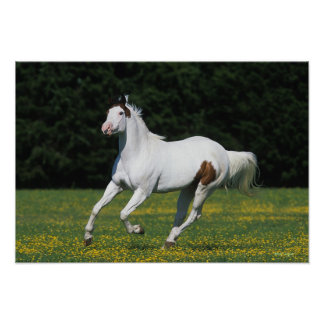 Måla hästspring i gräs- fält poster