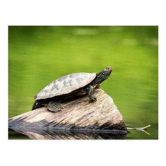 Målad sköldpadda på en logga vykort