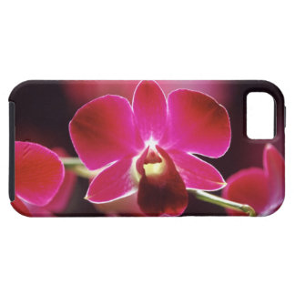 Malaysia Orchid iPhone 5 Fodraler