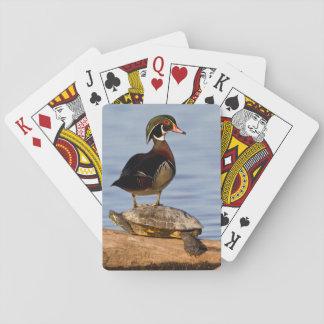 Male anseende för Wood anka på dengå i ax glidaren Spelkort