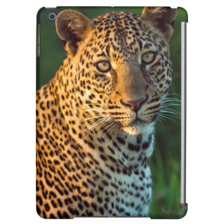 Male fullvuxen unge för Leopard (pantheraen