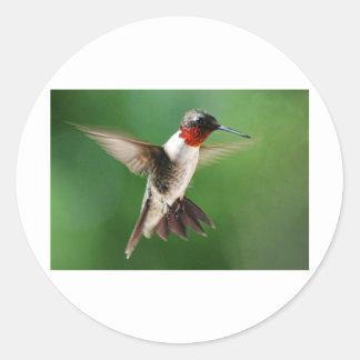 Male Hummingbird Runt Klistermärke