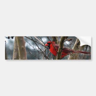 Male koncentrera för kardinal bildekal