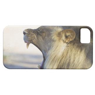 Male lejont ge en stor gäspning eller morrande iPhone 5 cases