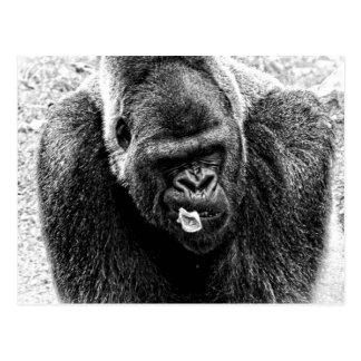 Male LowlandSilverbackgorilla som är svartvit Vykort