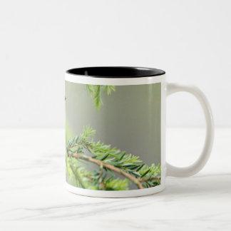 Male Magnoliasångare, Dendroicamagnolia Två-Tonad Mugg