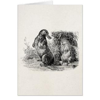 Mall för Anteater för vintagenäbbdjurPorcupine OBS Kort