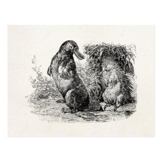 Mall för Anteater för vintagenäbbdjurPorcupine Vykort