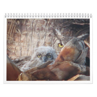 Mamma- och babyugglor i en palmträd kalender