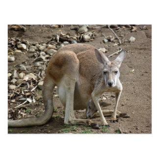 mamma och känguruunge vykort