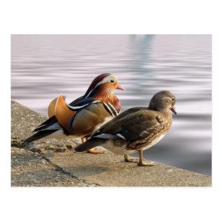 Mandarinen duckar togertherness vykort