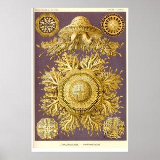 Manet - Discomedusae - Ernst Haeckel Poster