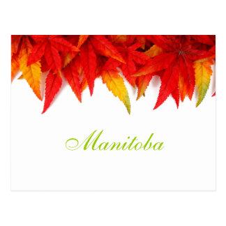 Manitoba höst lövvykort vykort