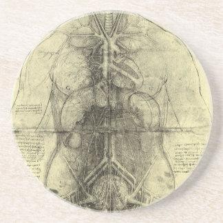Människaanatomi, kvinnlig Torso av Leonardo Da Underlägg Sandsten