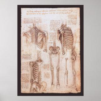 Människaanatomiskelett av Leonardo Da Vinci Poster