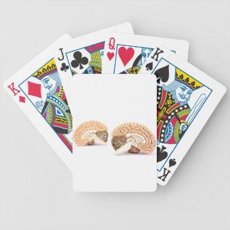 Människahjärnor modellerar isolerat på vitbakgrund spelkort