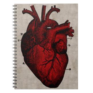 Människahjärtaanteckningsbok Anteckningsbok Med Spiral