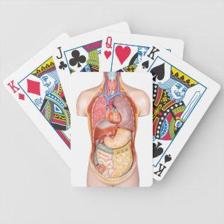 Människokroppen modellerar med organ som isoleras spelkort