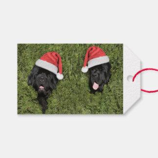 Märkre för gåva för jul för Notta björn hårig Presentetikett