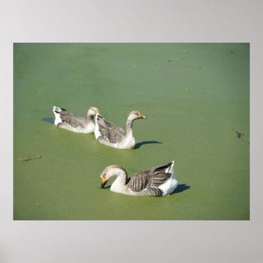 Mars 4th_Swamp duckar kanfas Posters