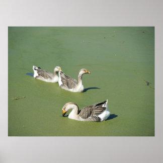 Mars 4th_Swamp duckar kanfas Poster