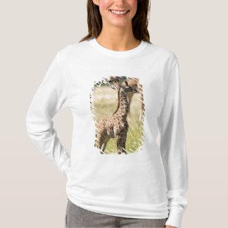 Masaigiraff, Giraffacamelopardalis 2 Tee Shirts