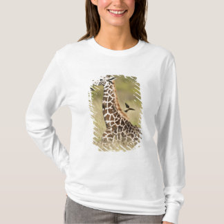 Masaigiraff, Giraffacamelopardalis Tröja