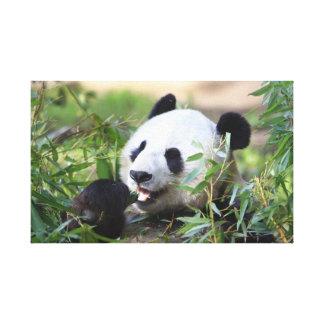 Mata Pandabjörnen Canvastryck