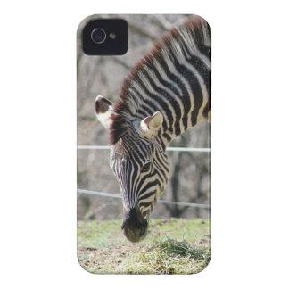 Mata zebror iPhone 4 skydd