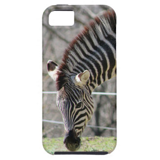 Mata zebror iPhone 5 fodral