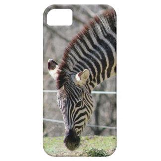 Mata zebror iPhone 5 skal