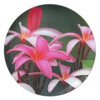 Maui Plumeria Tallrik