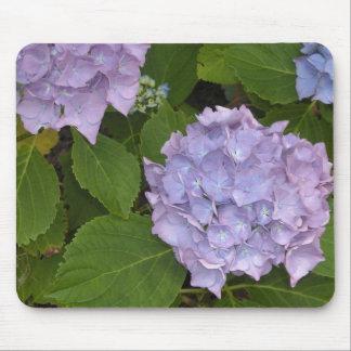 Mauve vanlig hortensia musmatta