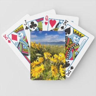 Medborgarebisonen spänner spelkort