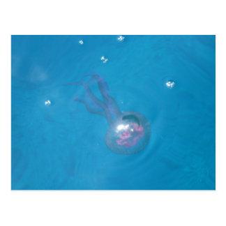 Medusa (manet) vykort