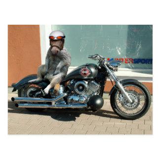Meerhorse bikervykort vykort