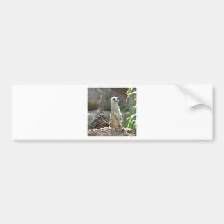 Meerkat Bildekal