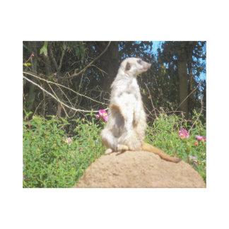 Meerkat Canvastryck