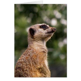 Meerkat Hälsningskort
