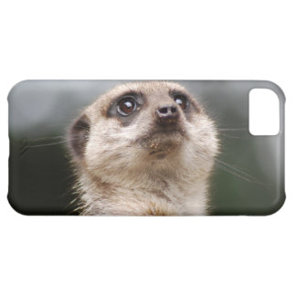 Meerkat iPhone 5C Fodral