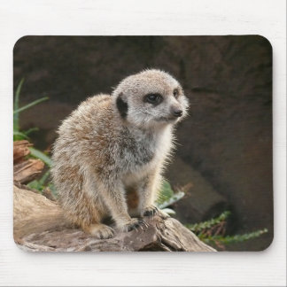 Meerkat Musmatta