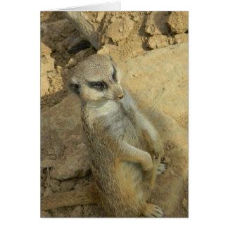 Meerkat spion hälsningskort