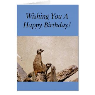 Meerkats grattis på födelsedagenhälsning! hälsningskort