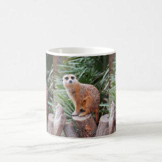 Meerkats Kaffemugg