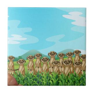 Meerkats Kakelplatta