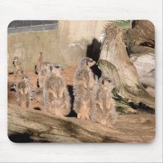 Meerkats Musmatta